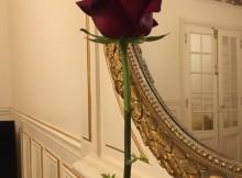 Hoa hong Valentine_14022020